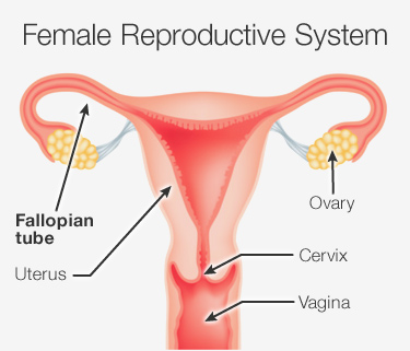 Fallopian Tube Failure Treatment In India | Blocked Fallopia
