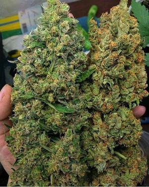 Image result for buying weed online (marijuana)