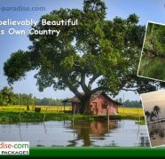 Used, Grand Kerala Tour packages with Kerala Paradise for sale  Kochi