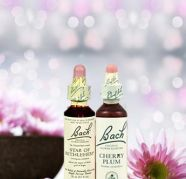 Bach Flower Remedies  Bach Flower Remedies in Gurgaon India for sale  India